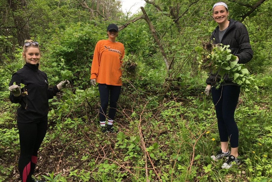 Merchology Volunteers Clearing Invasive Plant Species
